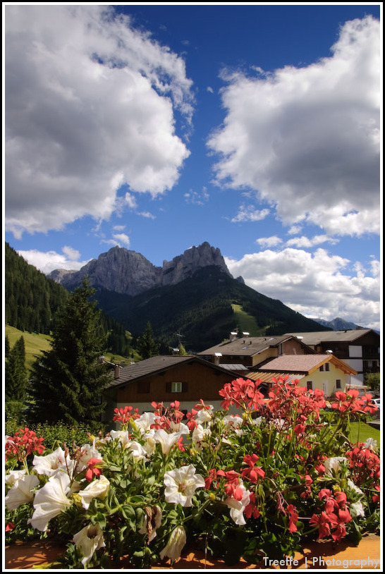 Floreal  composition with a view on the dolomites